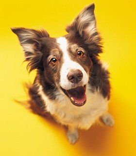 Veterinary - Leicester, Wigston - Albion Veterinary Clinic - Dog