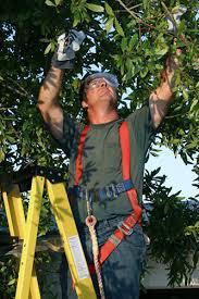 Tree Trimming lincoln, NE
