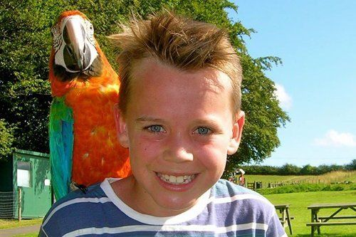 Young boy with a parrot oh his shoulder at the fun park in Durham