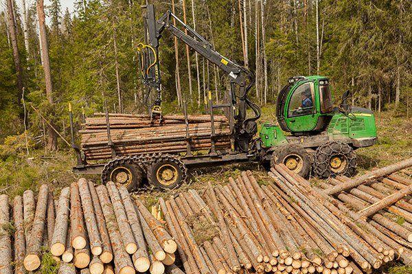 Abbattimenti forestali e vendita al dettaglio legna da ardere