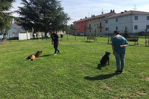 due persone che dialogano coi propri cani in un campo d'addestramento