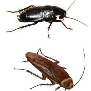 disinfestazione di interni, eliminazione insetti, servizi disinfestazioni