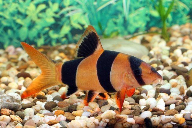 Fish & Accessories
