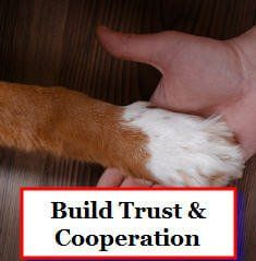 building trust between you and your dog