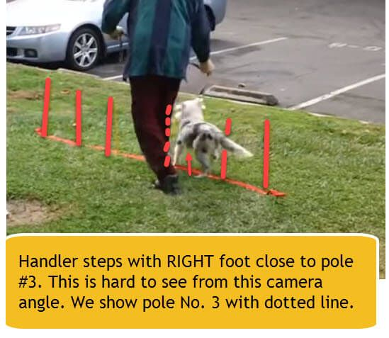 weave poles step #3 with right foot beside pole 3.