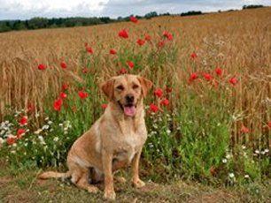 A dog sitting in fields