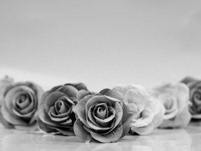 primo piano di rose in bianco e nero