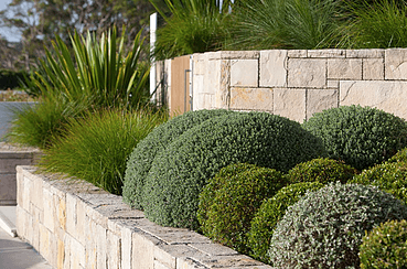 View of a maintained bushes
