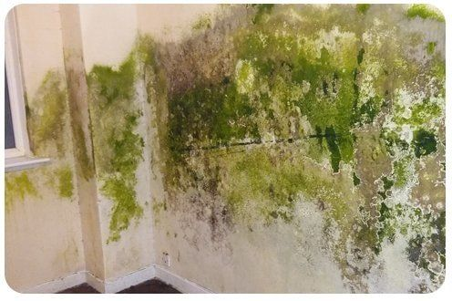 green damp mould on the wall