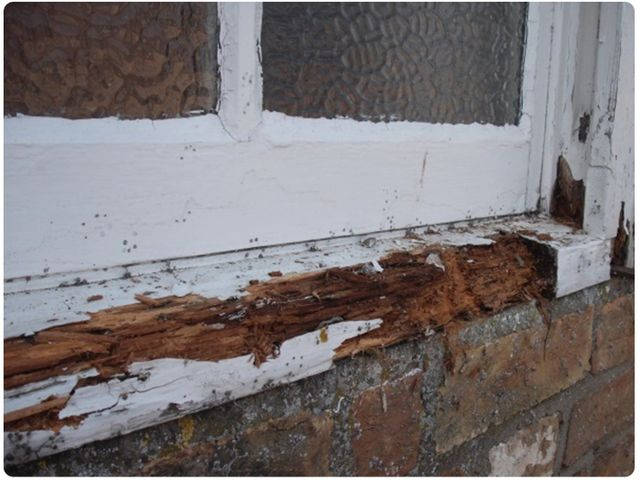 Timber decay due to damp