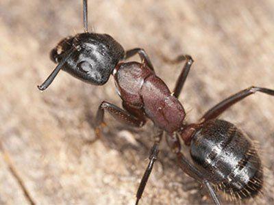 32ebc4161f6d LA Pest Control | Los Angeles, CA | Johnny Rat Pest Control