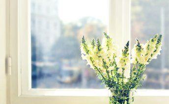 Flowers in front of window