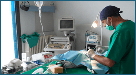 intervento veterinario