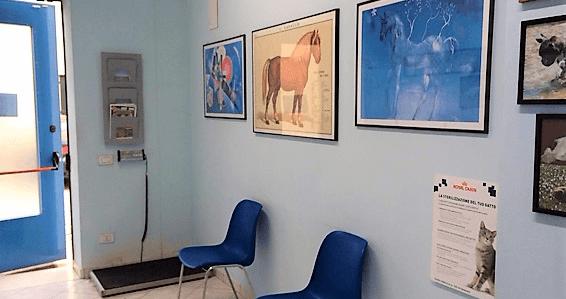 sala attesa veterinario