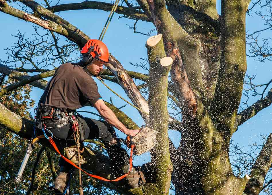 man up high in tree
