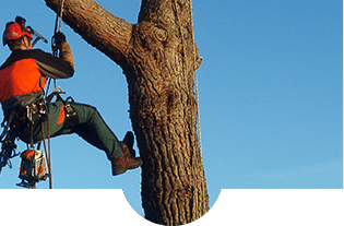 operaio con tuta da lavoro durante una fase di arrampicata su un albero con una fune