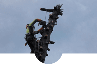 operaio durante una fase di abbattimento di un albero
