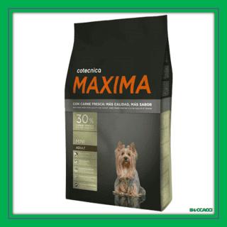maxima mini adult