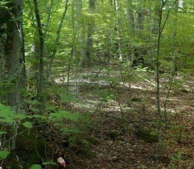 bosco da analizzare per perizia ambientale
