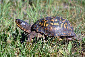 The Box Turtles Live