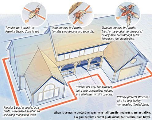 house with termites diagram