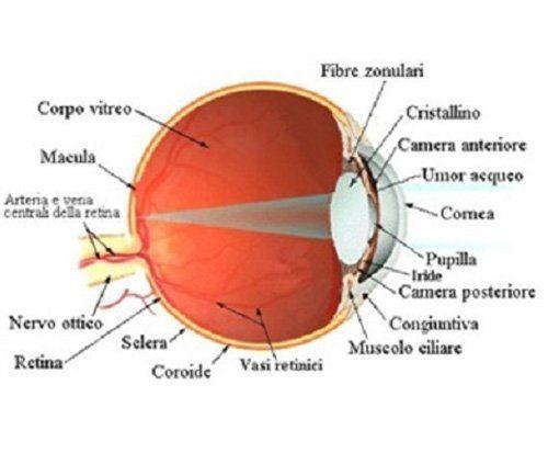 struttura di un occhio