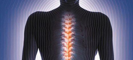 human spiral cord