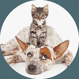 pet grooming spa