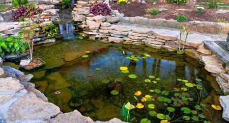 Image of a pond