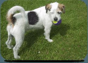 Dog Home Boarding Medway