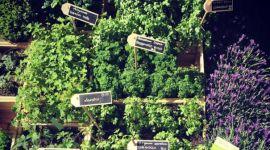 erbe curative, giardino botanico, erbe della parafarmacia
