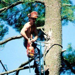 Residential Commercial And Municipal Tree Services