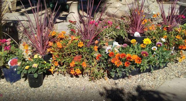 california native plants for the garden, california kitchen designs, rock gardens landscaping designs, california landscape designs, country garden designs, california home designs, on antioch california rock garden designs
