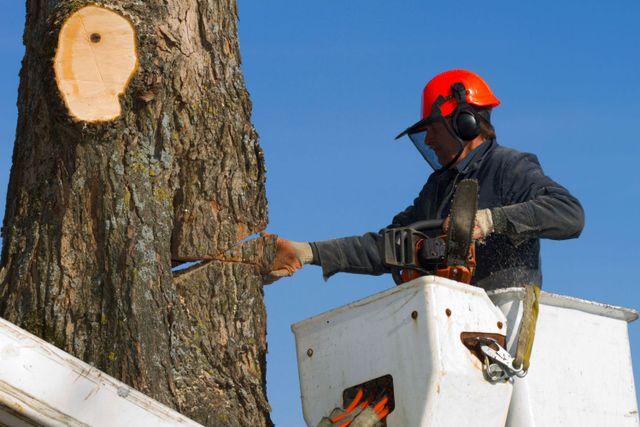 tree thinning crane in Hamilton, OH