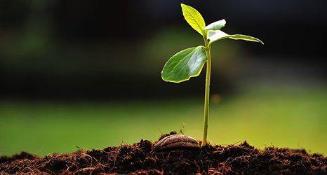 multipurpose topsoil