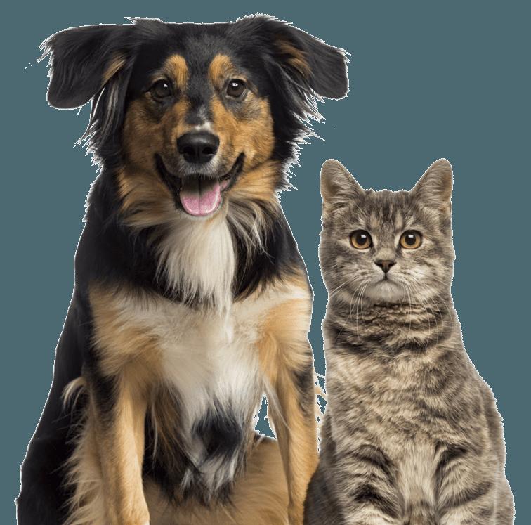 Veterinary Biopsy Procedures Buffalo, NY