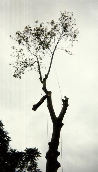 A Nelson man completing tree planting and pruning services