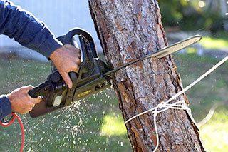 Tree Removal Meadville & Edinboro, PA