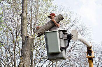 Tree Trimming Meadville & Edinboro, PA