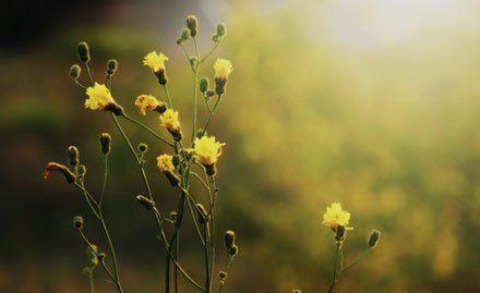 Mindfulness meditation courses