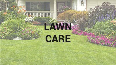 Lawn Disease Control Wilmington, NC