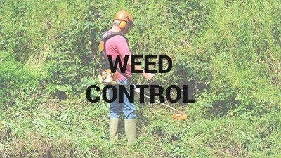 Lawn Weed Control Wilmington, NC