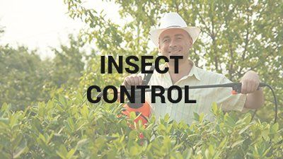 Lawn Pest Control Wilmington, NC