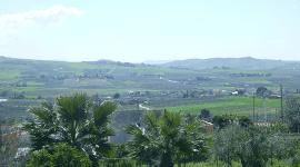 veduta di un paesaggio verde