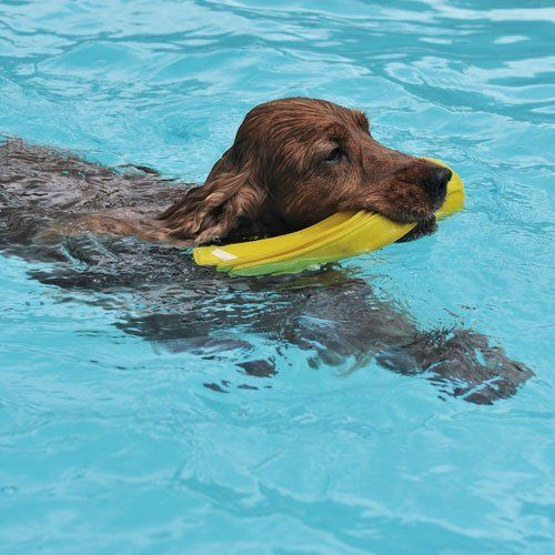 hydrotherapy for dog
