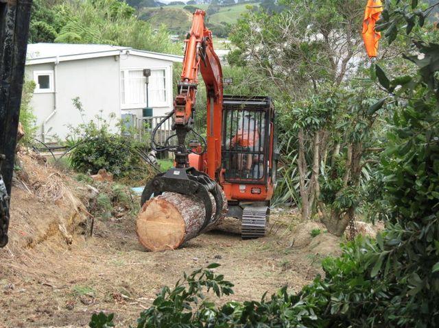 Tree grab carrying trunk in Awhitu