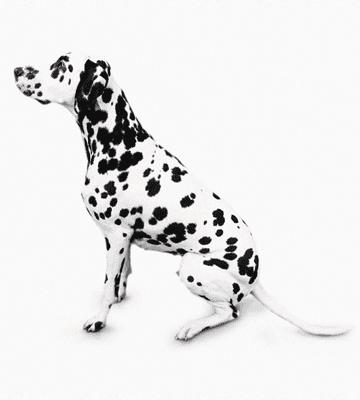 Dog Grooming Gravesend
