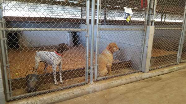 Dog Boarding Roy Wa Mckenna Kennels Pet Resort