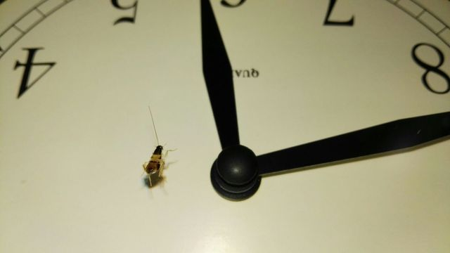 Supella Longipalpa su un orologio a parete