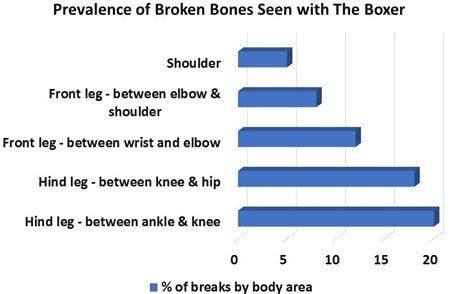 Chart-Prevalence-Broken-Bones-Boxer-Breed